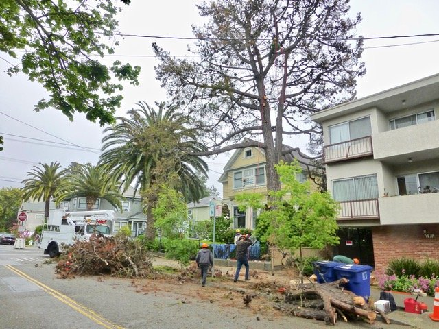 Giving An Estimate For Tree Service